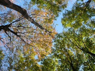 Trees VT