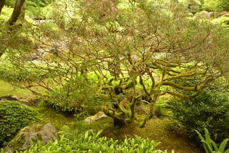 tree-japanese-garden