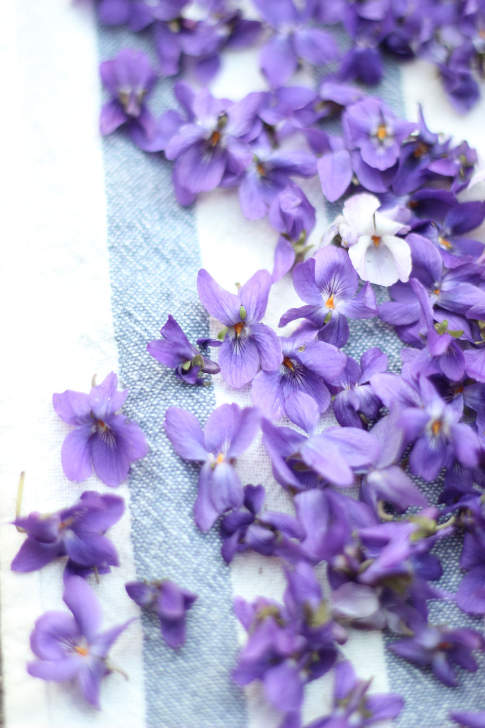 violets-on-towel