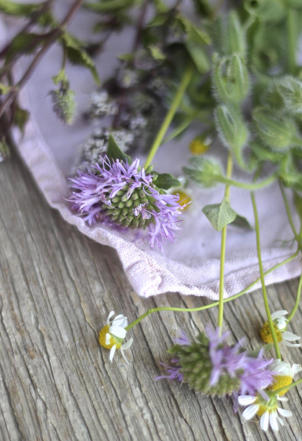 monarda chamomile boquet